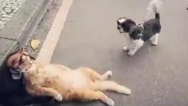 Gato Bem Sossegado Quando O Cachorrinho Fica Latindo Nele Hahaha!