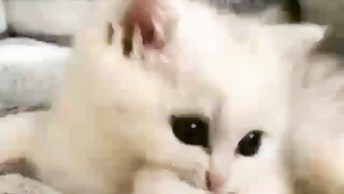 Gato Branco Com Olhos Redondos E Escuros, Que Lindo Que Ele É!
