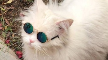 Gato Branco De Óculos, Quanto Estilo Neste Bichano Hein!