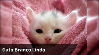Gato Branco Dos Olhinhos Escuros, Ele Parece De Pelúcia De Tão Lindo!
