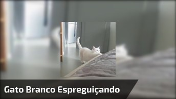 Gato Branco Espreguiçando, Ele É A Coisa Mais Linda Do Dia!