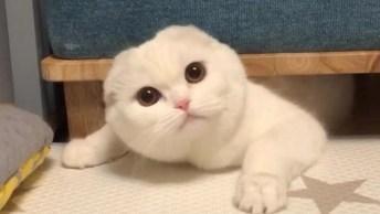 Gato Branco Fazendo Coisas Fofas, Quem Resiste A Uma Fofura Dessa!
