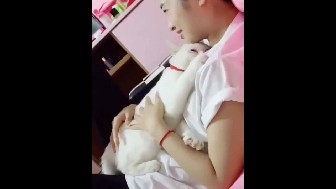 Gato branco lindo deitando no colo de sua tutora para dormir