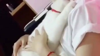 Gato Branco Lindo Deitando No Colo De Sua Tutora Para Dormir!