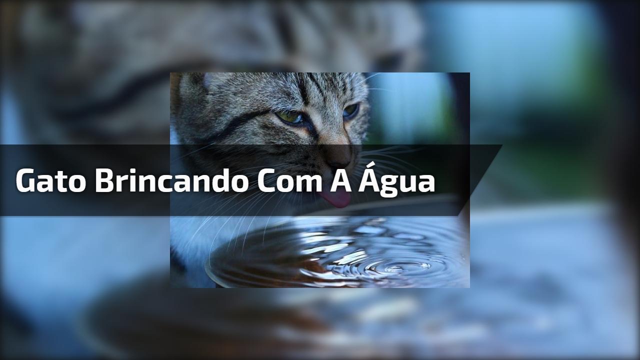 Gato brincando com a água