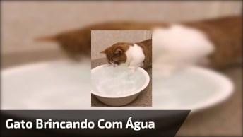 Gato Brincando Com Água! Quem Disse Que Gato Não Gosta De Água?