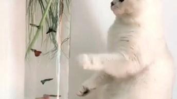 Gato Brincando Com Peixinhos Dentro Do Aquário, Tomara Que Ele Não Vire Isso!