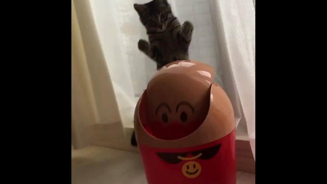 Gato brincando com tampa de cesto, veja como ele é brincalhão!