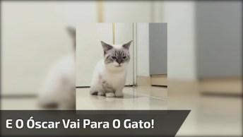 Gato Brincando De Fingir Que Levou Um Tiro, Ele E Sua Calma!