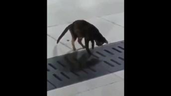 Gato Caça Um Rato De Um Lugar Muito Difícil, Você Vai Se Impressionar!