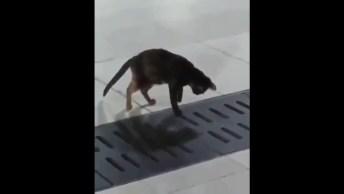 Gato Caçando Rato, Olha Só A Habilidade Incrível Deste Animal!