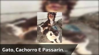 Gato, Cachorro E Passarinho, Uma Combinação Perfeita, Hahaha!