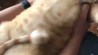 Gato Com Barriga Fofinha, Ela Até Remexe Quando Balança Ele!