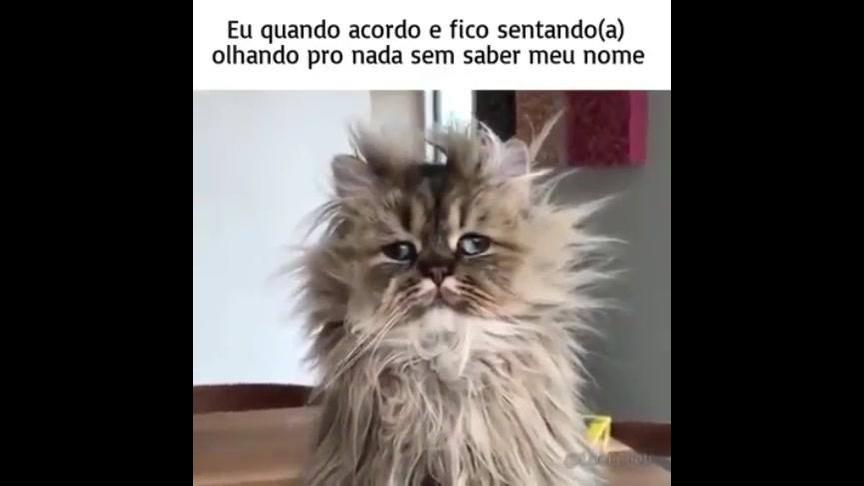Gato com cara arrepiada