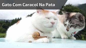 Gato Com Caracol Na Pata Deixando O Outro Intrigado, Confira!