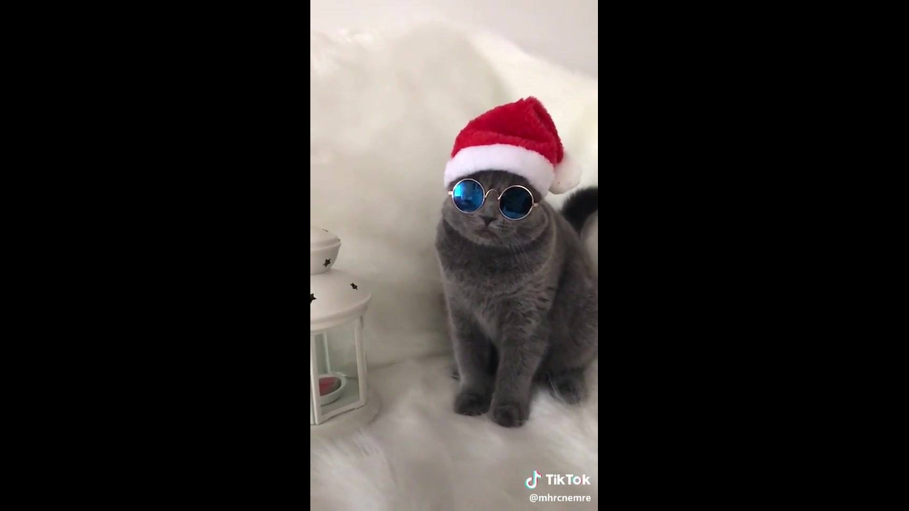 Gato com chapéu de natal e óculos escuro