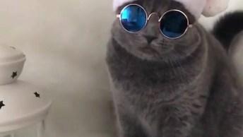 Gato Com Chapéu De Natal E Óculos Escuro, Ele Tem Muito Estilo!