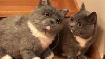 Gato Com Gatinho De Pelúcia De Seu Lado Que É Sua Replica, Que Fofinho!