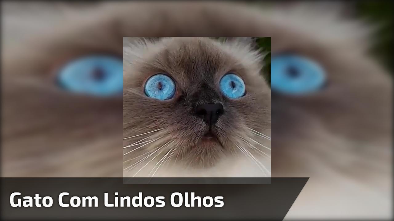 Gato com lindos olhos