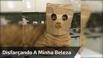Gato Com Máscara De Papel, Como Ele Ficou Quietinho Para Gravar O Vídeo Né?