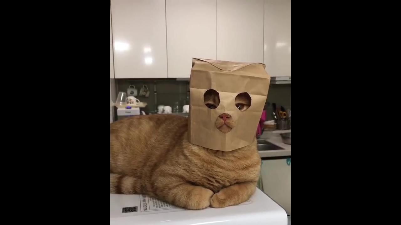 Gato com máscara para não ser identificado no video hahaha!