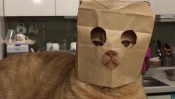 Gato Com Máscara Para Não Ser Identificado No Vídeo Hahaha!