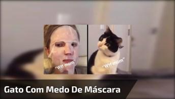 Gato Com Medo De Máscara Facial, Que Carinha Mais Engraçada!