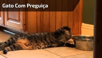 Gato Com Nível Hard De Preguiça, Veja Como Ele Esta Bebendo Água!