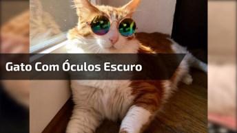 Gato Com Óculos Escuro, Esse Sim Arrasou No Visual Hein!