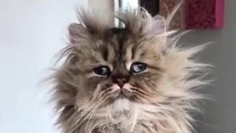 Gato Com Pelo Arrepiado, Representando Você Quando Acorda Hahaha!