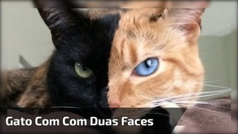 Gato Com Rosto Metade De Cada Cor, Até Os Olhos São Diferentes!
