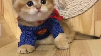 Gato Com Roupinha De Super Herói, Ele Ficou A Coisa Mais Fofa Desse Mundo!
