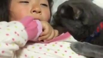 Gato Consolando Criança Que Esta Chorando, Depois Dizem Que Eles Não Sentem!
