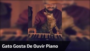 Gato Curtindo Seu Dono Tocar Piano, Curtindo E Atrapalhando Né Hahaha!