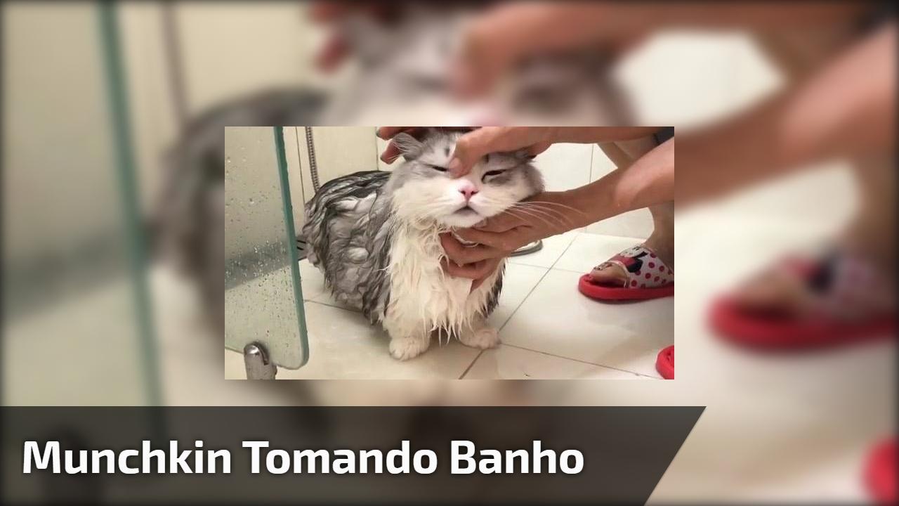 Munchkin tomando banho