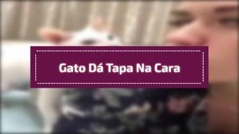 Gato Dá Tapa Na Cara De Tutora Fazendo Bico, Para Com Essa Frescura!