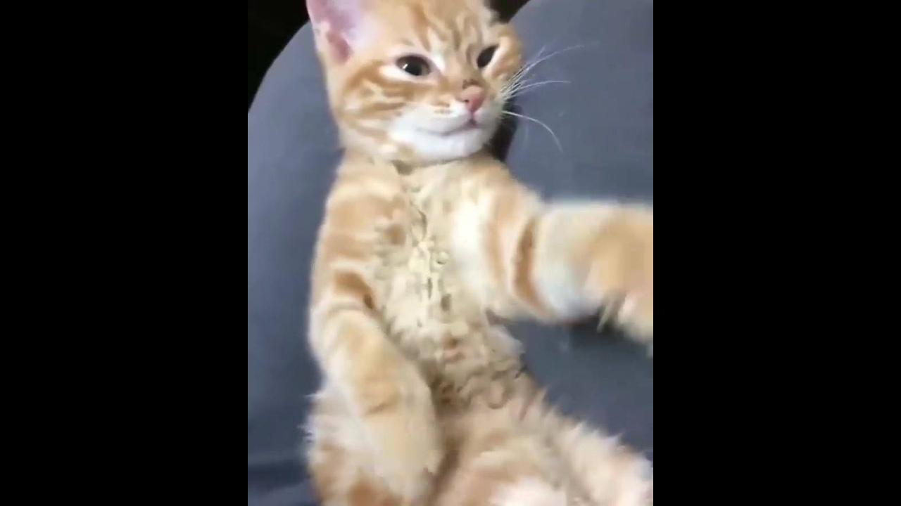 Gato dançando com as patinhas, até que ficou bem divertido esse video hahaha!
