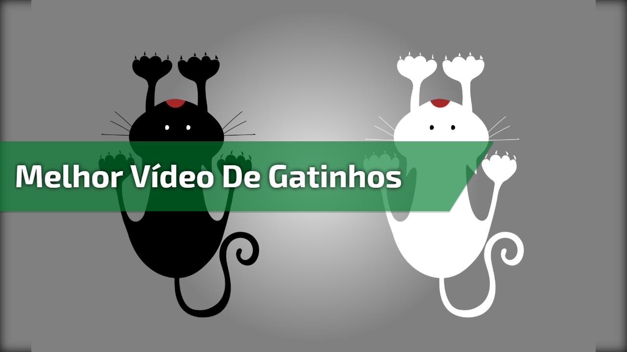 Melhor vídeo de gatinhos