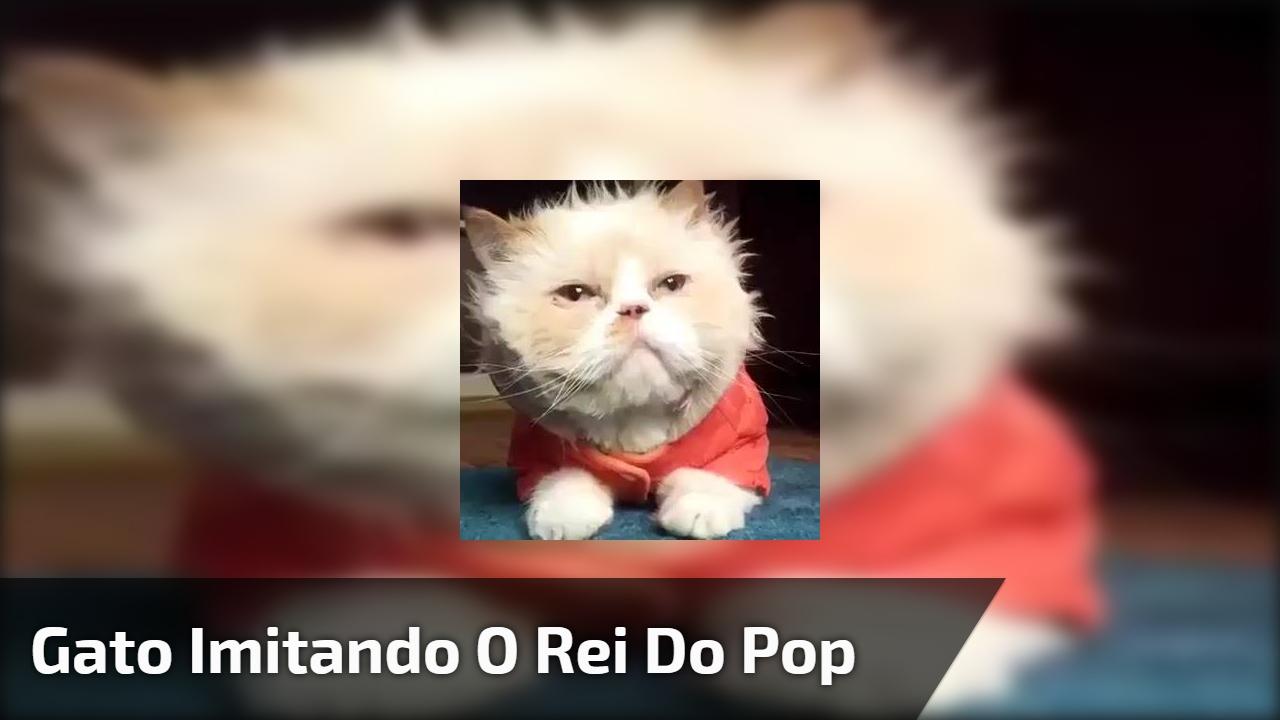 Gato imitando o rei do pop