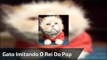 Gato Dançando Música Do Rei Do Pop, Ficou Bem Legal Hahaha!