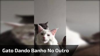 Gato Dando 'Banho' No Outro, É Uma Cena De Muito Amor E Carinho!