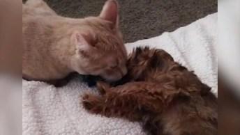 Gato Dando Carinho Para Seu Novo Irmãozinho, Olha Só Que Lindo!