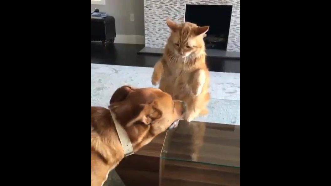 Gato dando patadinhas na cara do cachorro