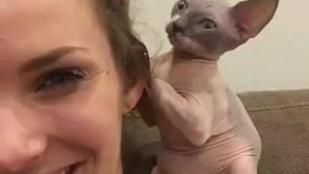 Gato De Raça Sem Pelo Lambendo O Cabelo Da Mamãe Humana!
