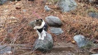 Gato De Roupa E De Coleira Passeando, Ele Acha Que É Um Cachorro Hahaha!