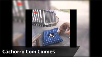 Gato Deita Na Caminha De Cachorro, Veja O Que Ele Faz De Ciúmes!