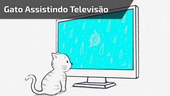 Gato Deitado De Bariga Para Cima Assistindo Televisão, É Muita Tranquilidade!