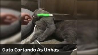 Gato Deixa Cortar As Unhas Após Ser Colocado Objeto Em Cima Dele, Confira!