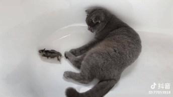 Gato Deixa Roedor Tentar Fugir Dele, Será Que Ele Vai Matar O Bichinho?