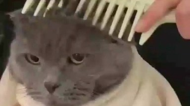 Gato Deixando Seus Pelos Serem Aparados, Uma Fofura De Gato!